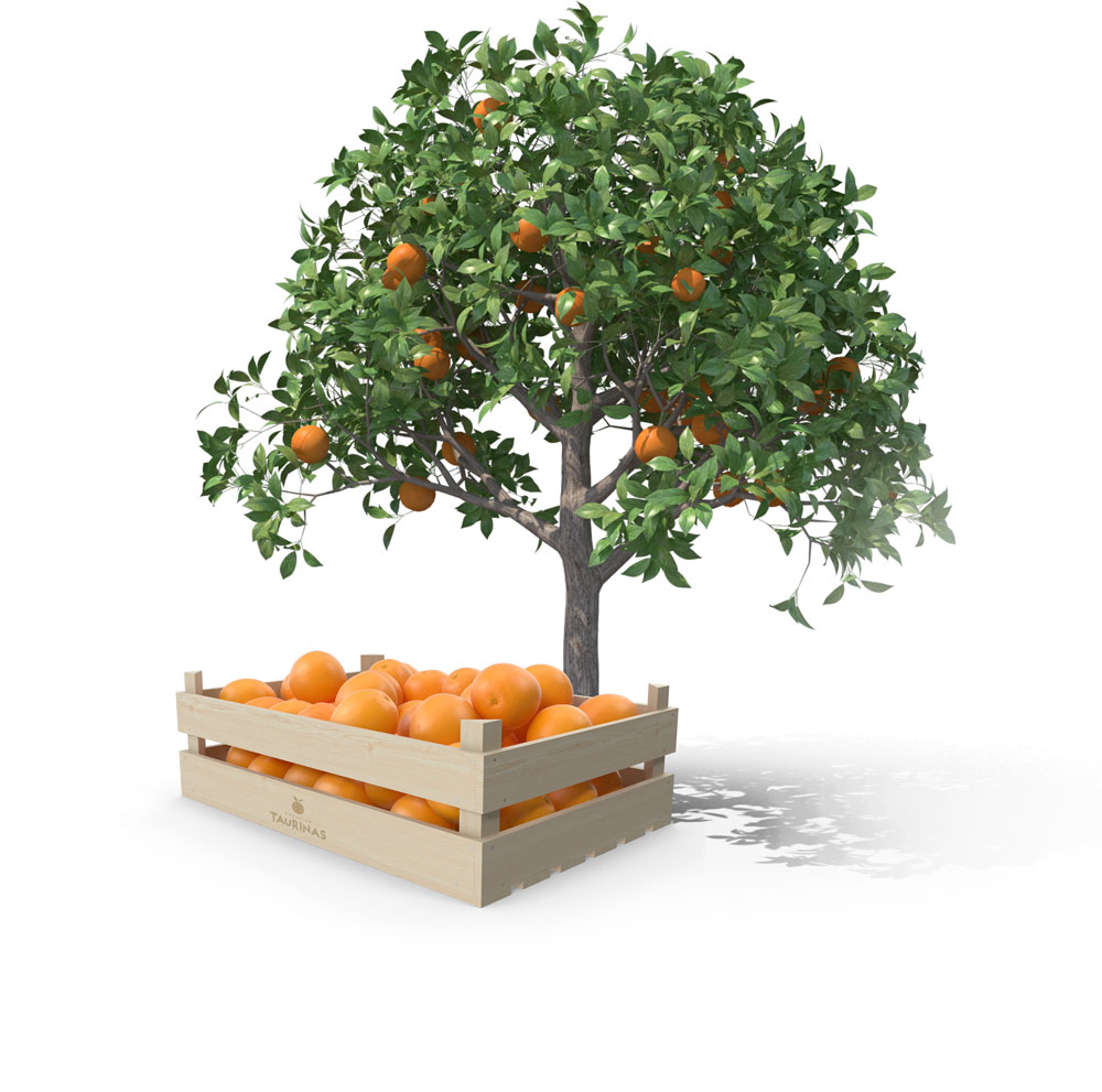 img-naranjas-taurinas2