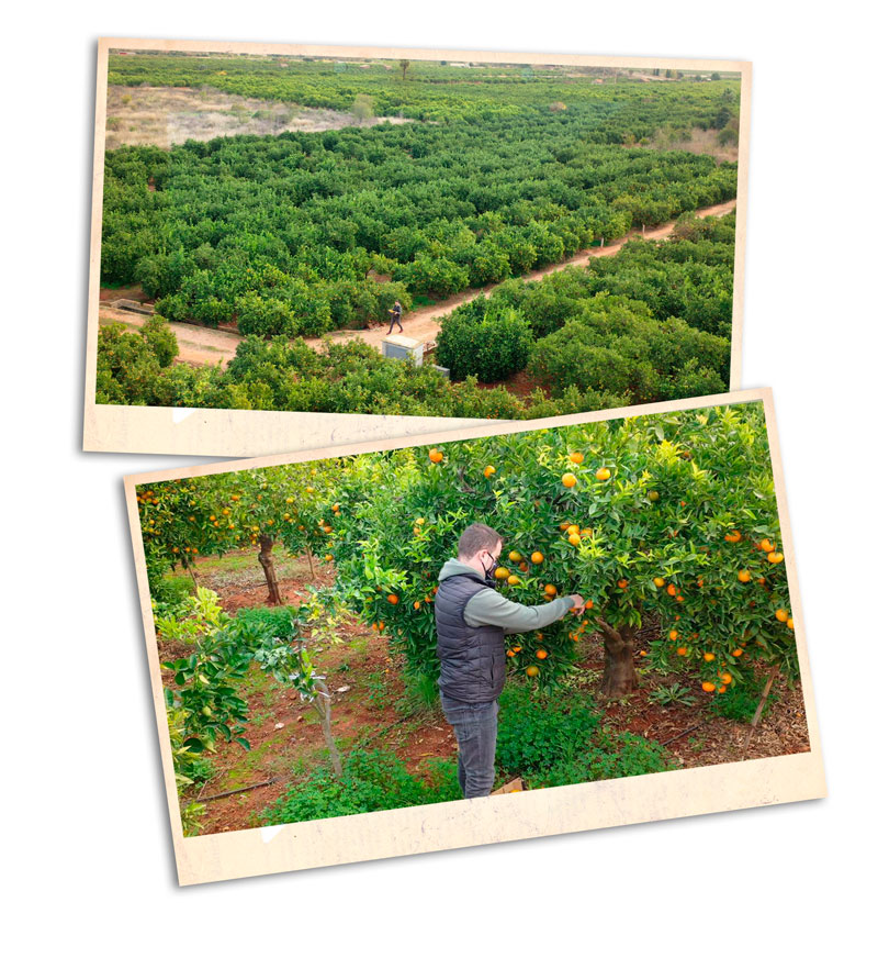 img-familia-silvestre-naranjastaurinas2